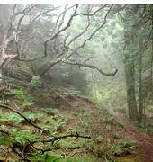 Polipoli Forest