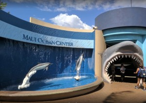 Maui Ocean Center jaws